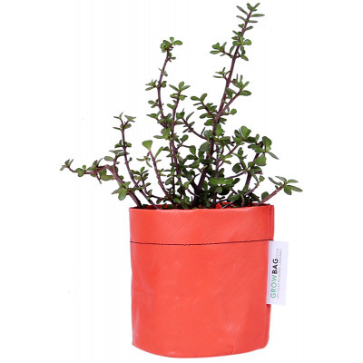 Growbag Regular Orange Planter