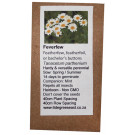6 Degrees East Heirloom Herb Seeds - Feverfew - Tanacetum Parthenium