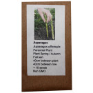 6 Degrees East Heirloom Veg Seeds - Asparagus