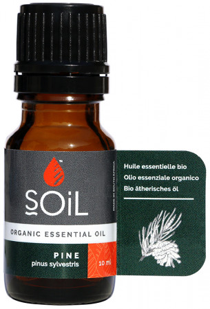 Soil Pine Essential Oil